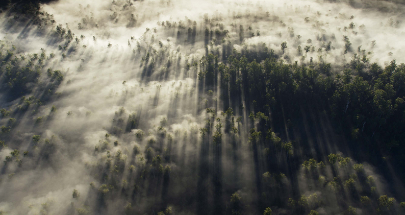 Tarkine, Aerial. Photo: Peter Beeh